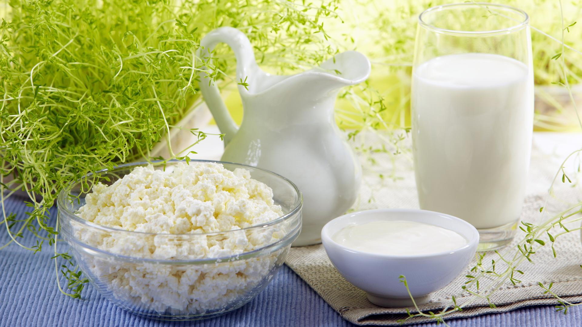 Чем можно кормить французского бульдога молочка