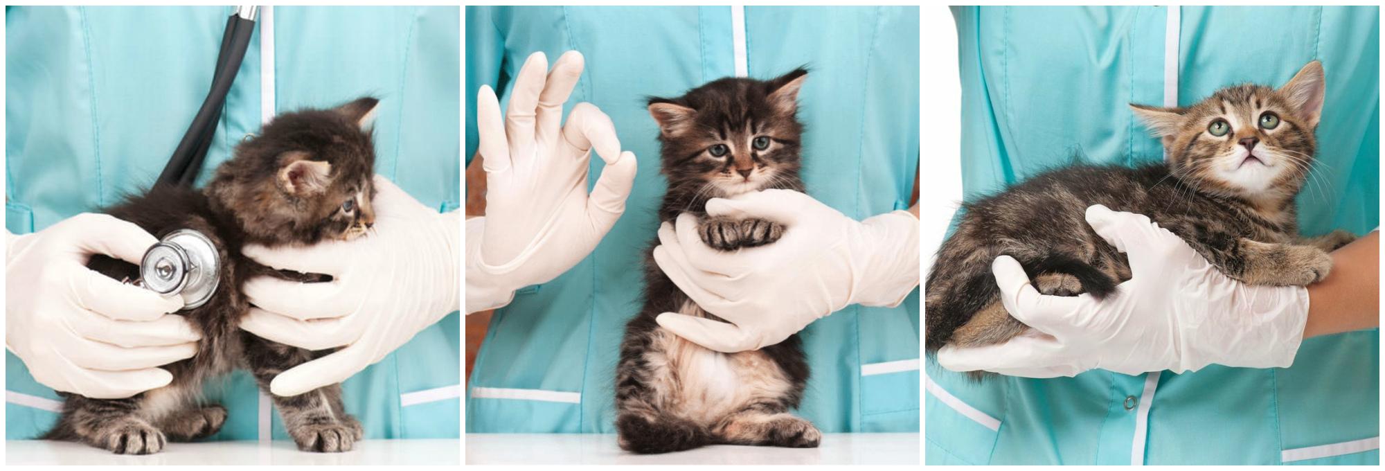 как лечить пищевую аллергию у кошек