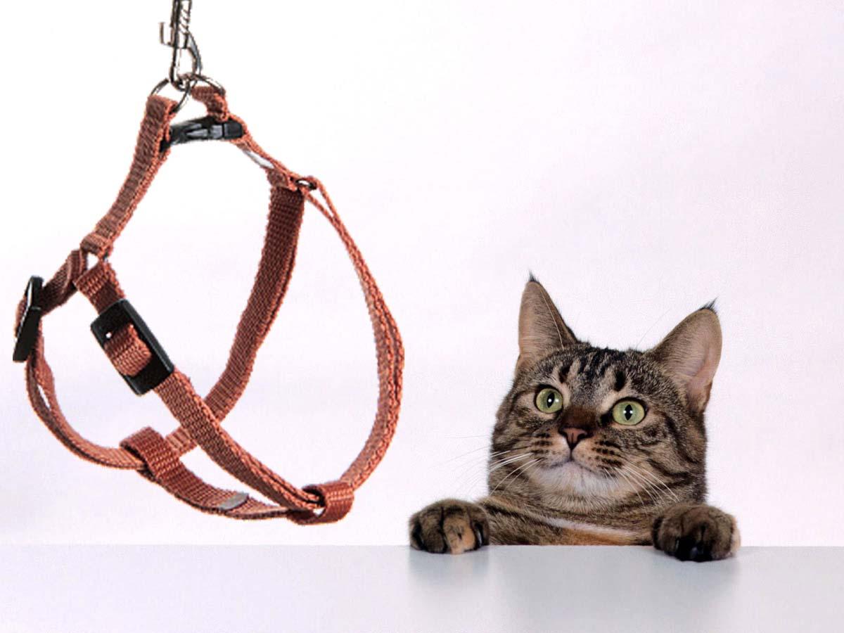 как правильно надеть шлейку на кошку