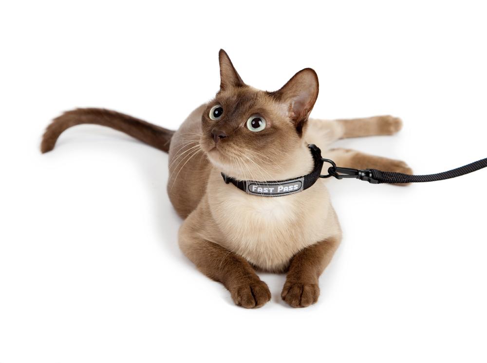ошейник с поводком на кошку