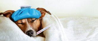 признаки укуса клеща у собаки
