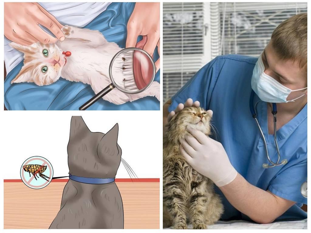 профилактика кошачьей аллергии
