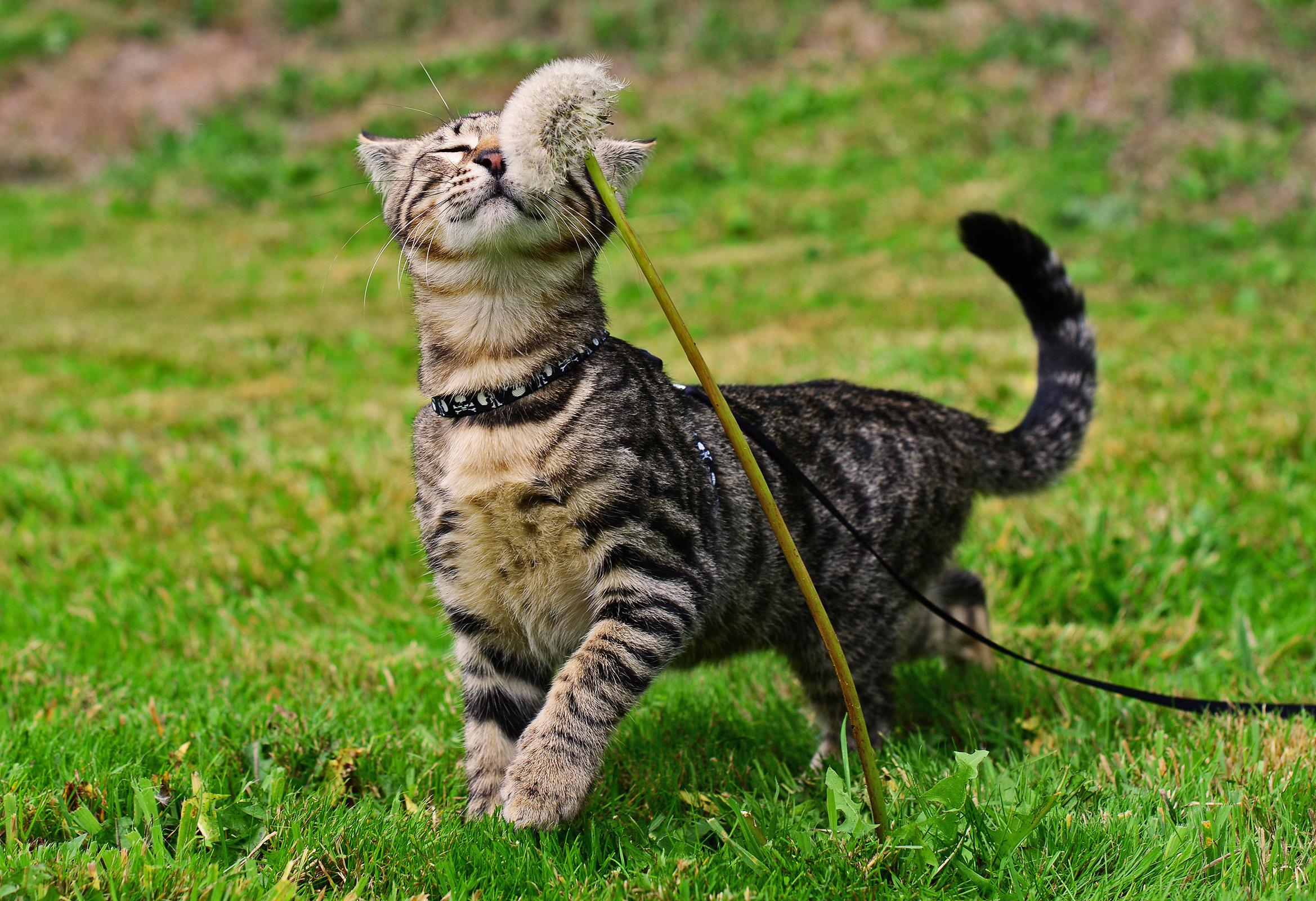 шлейка на кошку для прогулки 1