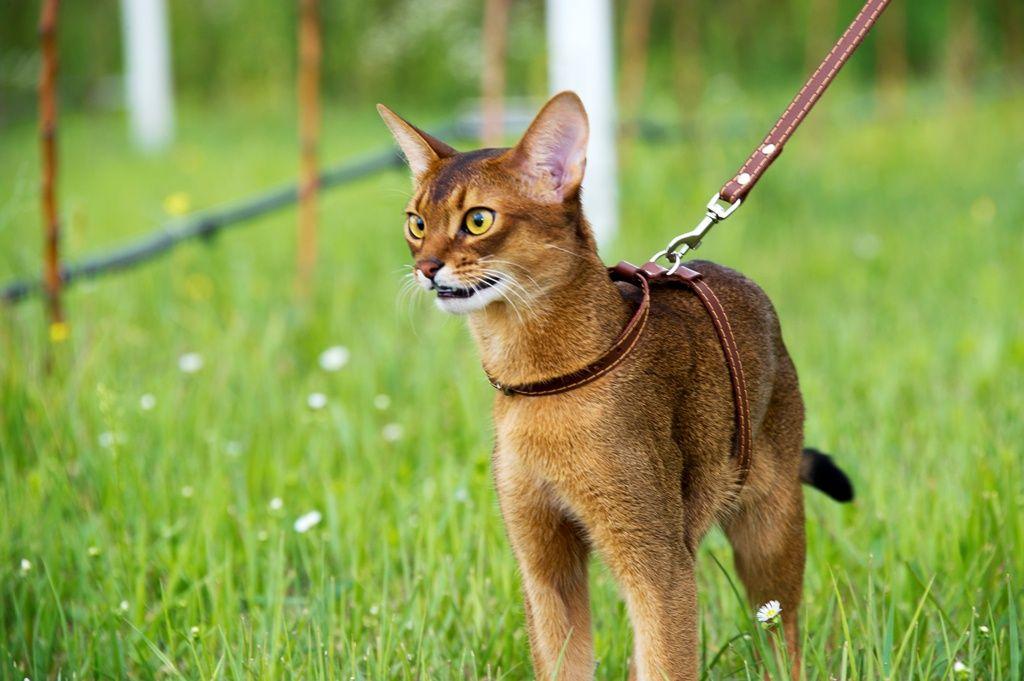 шлейка на кошку для прогулки 2