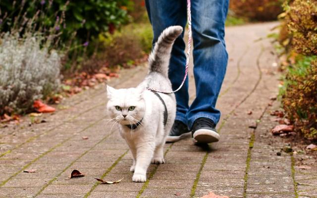 шлейка на кошку для прогулки 3