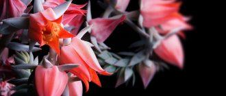 тропические растения в домашних условиях
