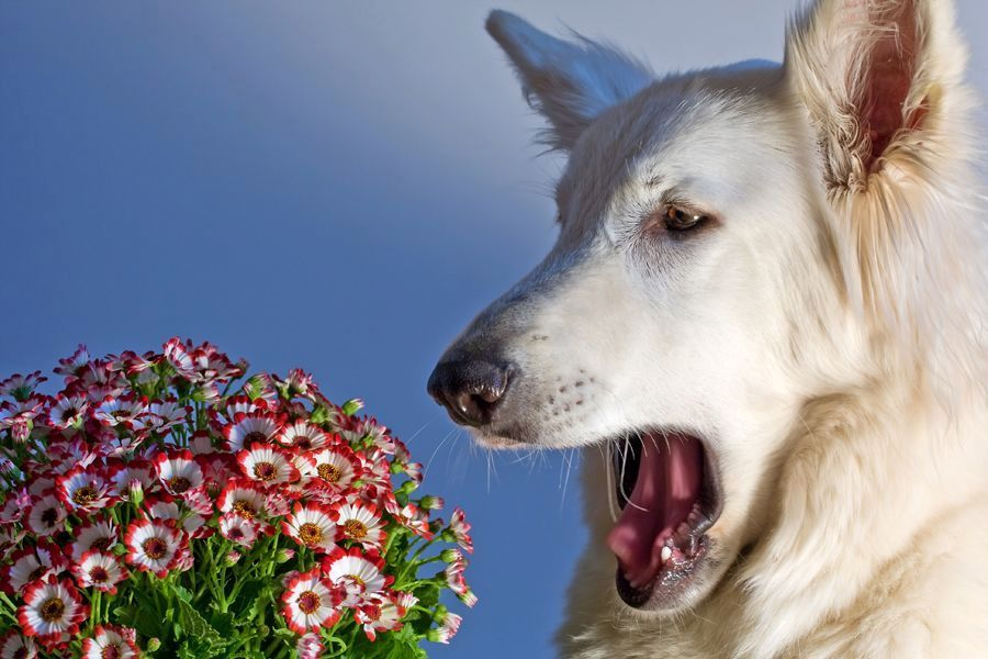 Аллергия у собак проявления
