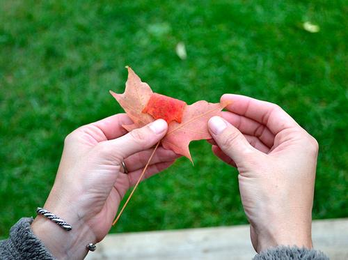 Первый листочек