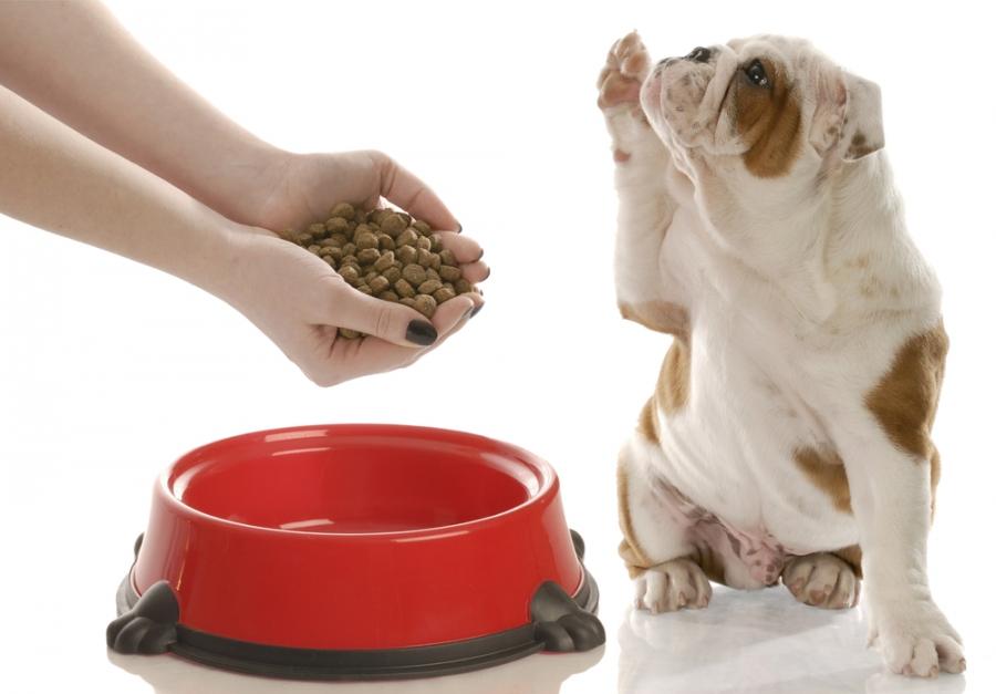 Почему не набирает вес новорожденный щенок