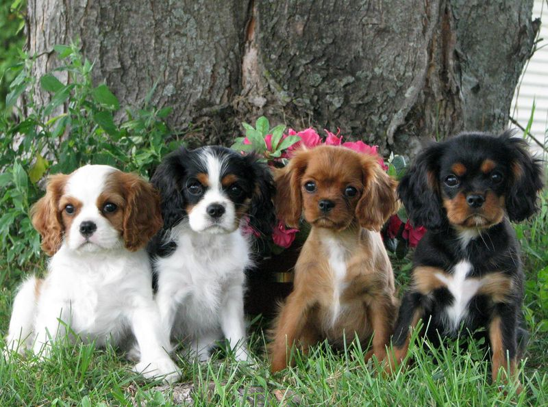Собаки мелких пород