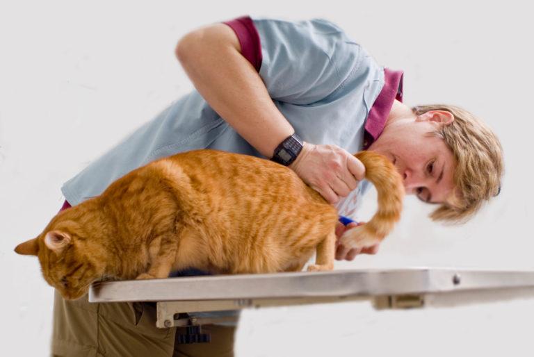 Урологический цистит у кота