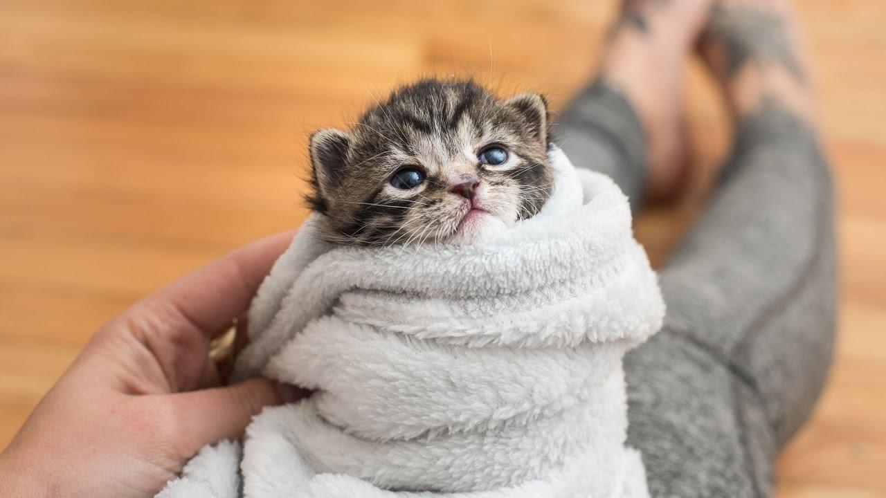 Промівание глаз котенка