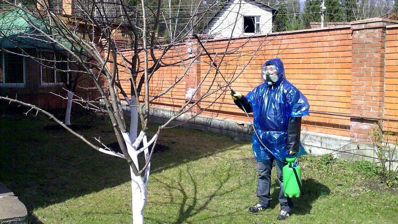 Первое опрыскивание деревьев