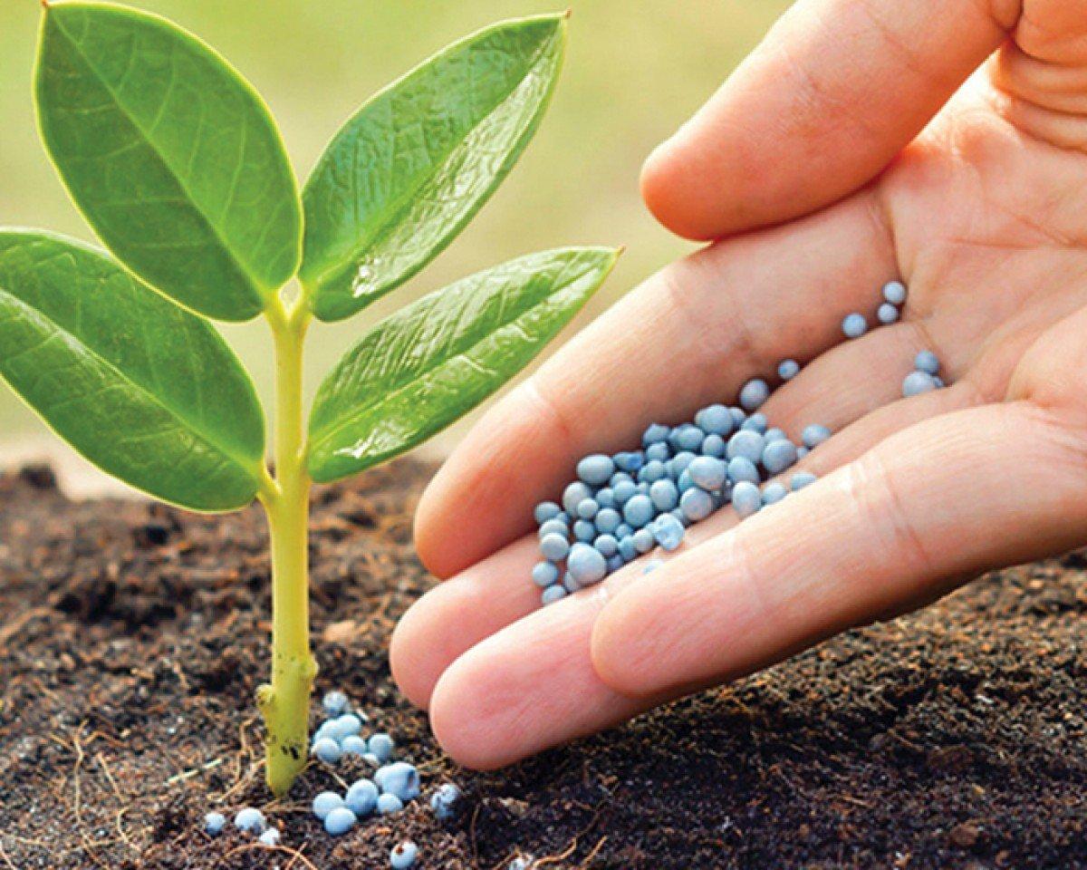 Зачем подкармливать растения