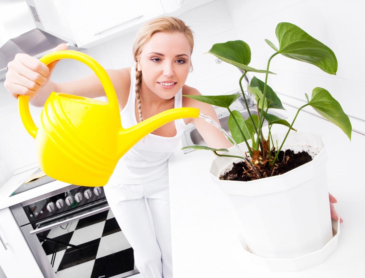 правила подкормки комнатных растений
