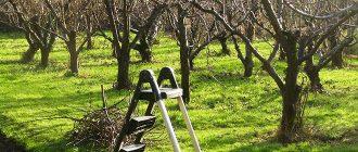 Первое опрыскивание плодовых деревьев