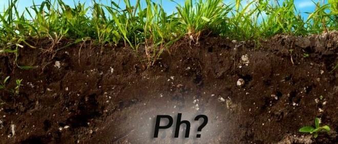 Как определить кислотность почвы с помощью уксуса