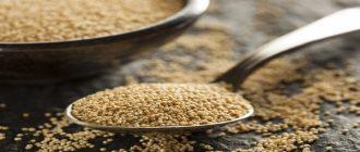 Польза и вред семян амаранта
