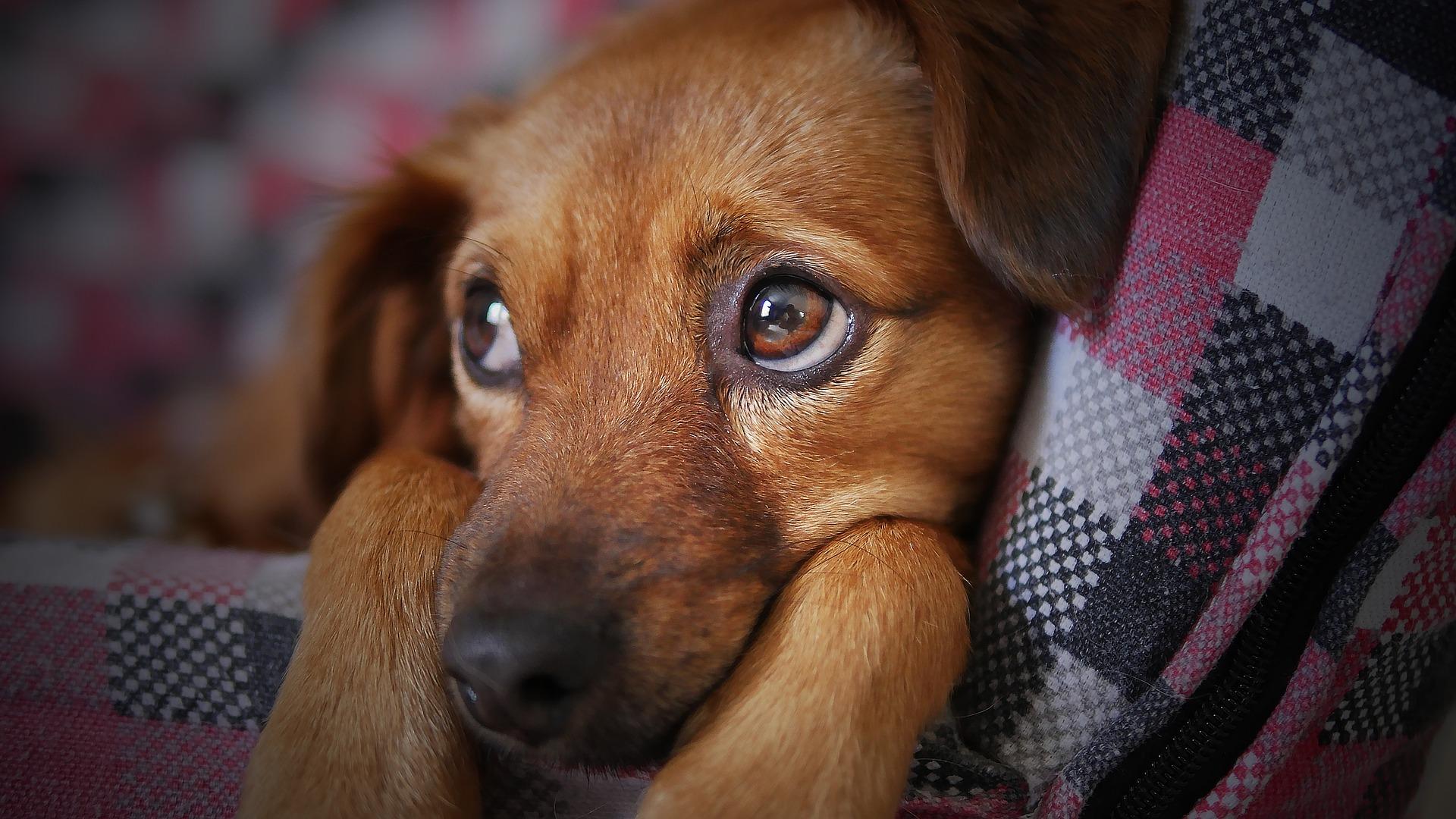 Симптомы при отказе лап у собаки