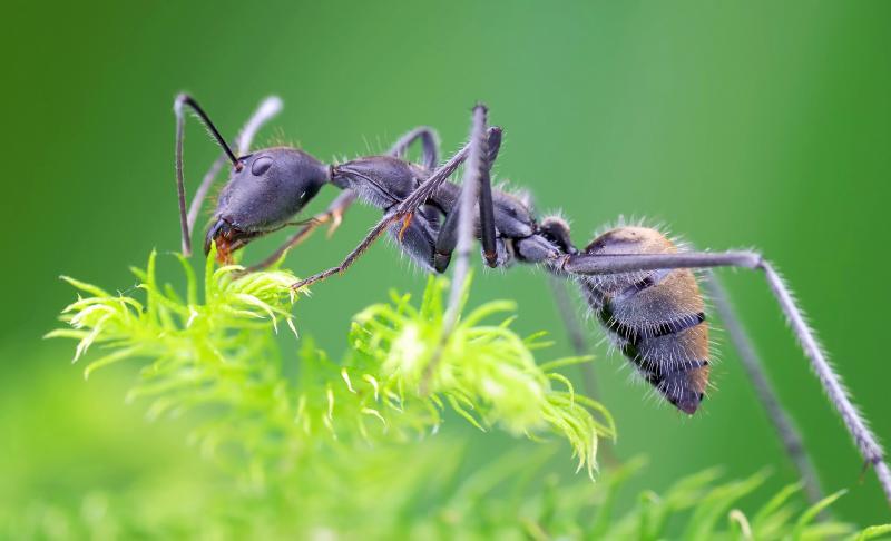 избавиться от муравьев народные методы
