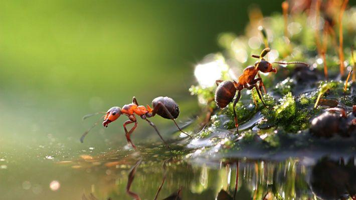 муравьи польза или вред
