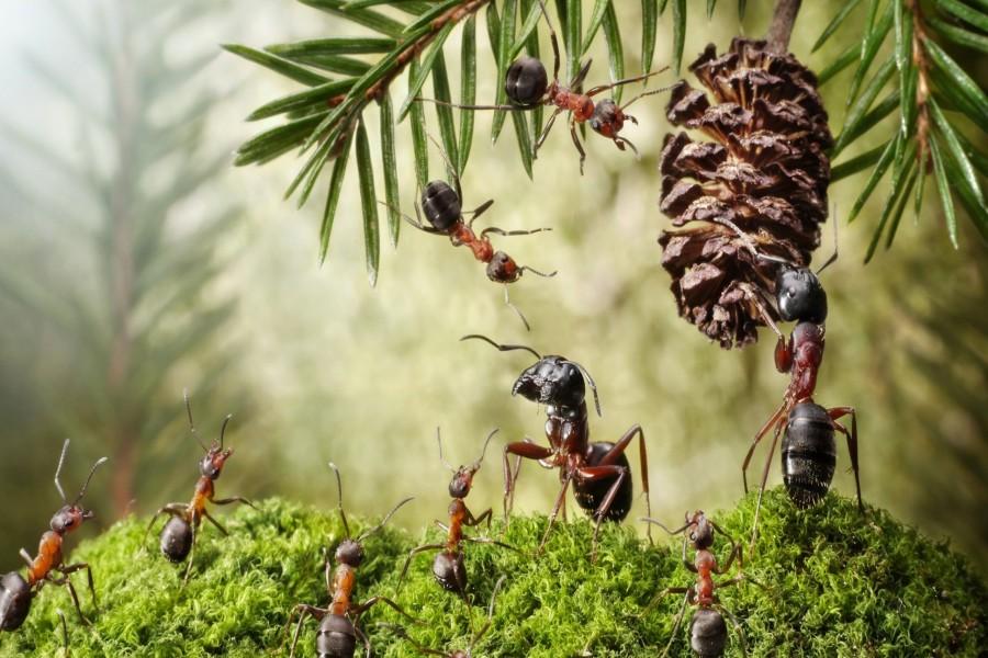 муравьи вред