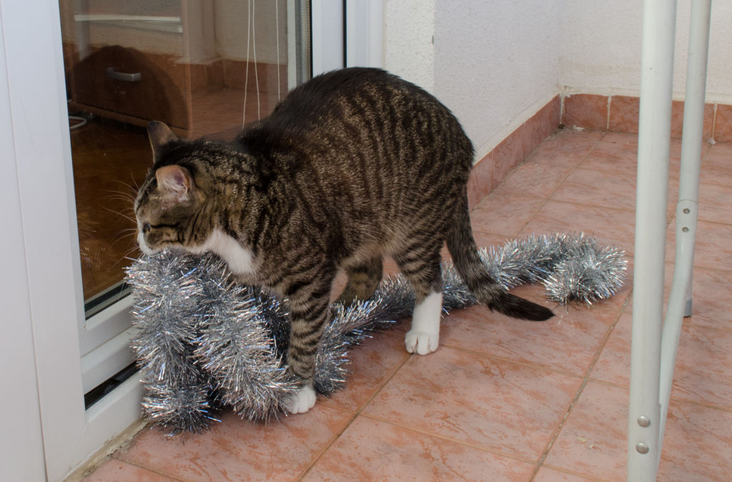 непроходимость кишечника у котов профилактика