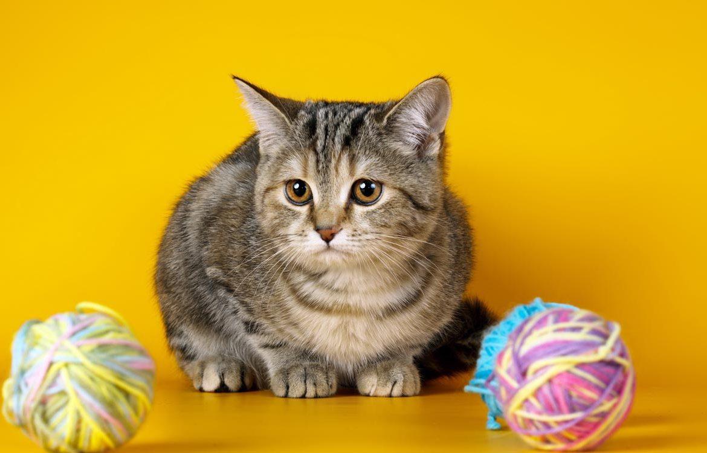 непроходимость желудка кошек
