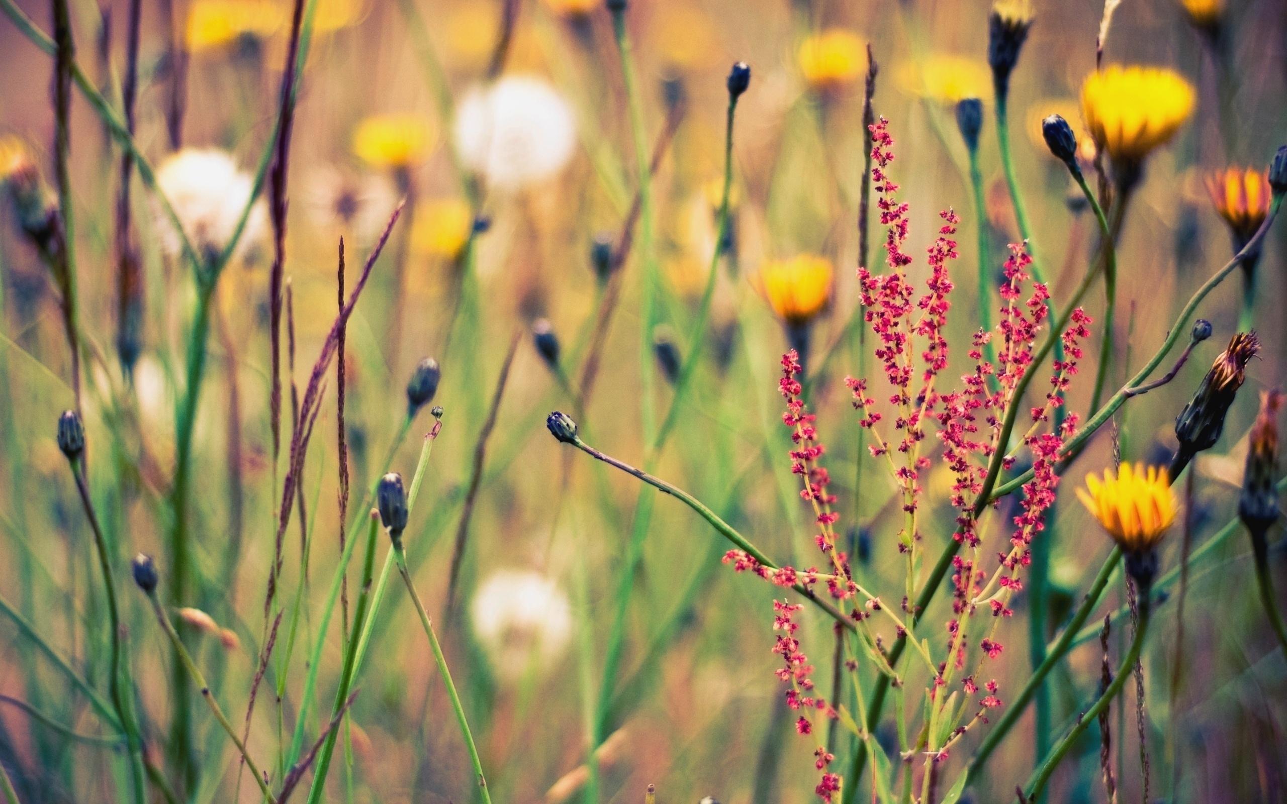 обереги растения