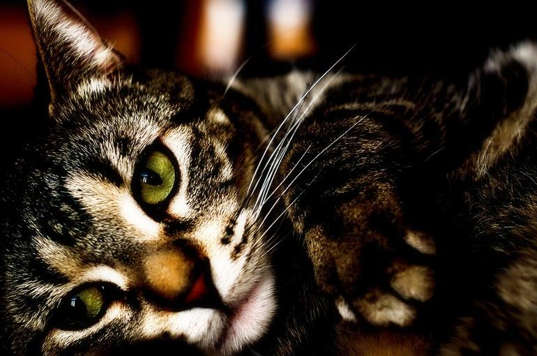 Сахарный диабет у кота симптомы лечение