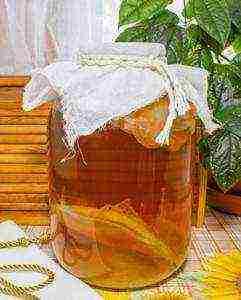 chaynyy-grib-poleznye-svoystva-protivopokazaniya-kak-vyrastit-s-nulya-uhazhivat-v-domashnih-usloviyah2019-02-11