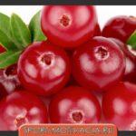 molochnaya-dieta-put-k-stroynoy-figure2019-02-10
