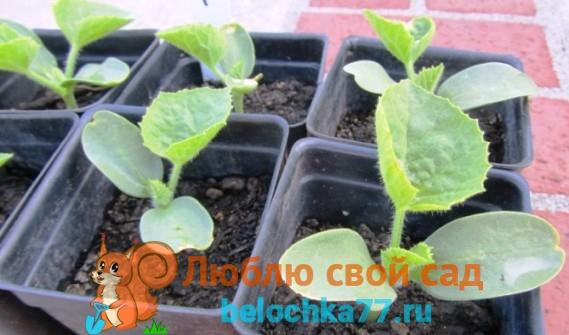 dynya-vyraschivanie2019-02-12