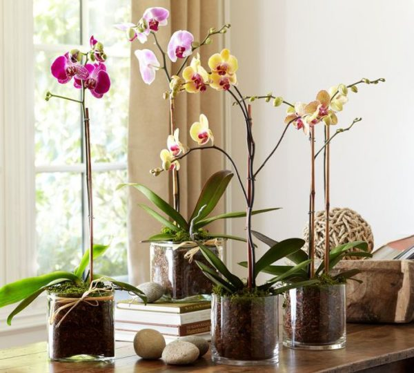 komnatnaya-orhideya-uhod-za-tropicheskoy-krasavitsey2019-02-12