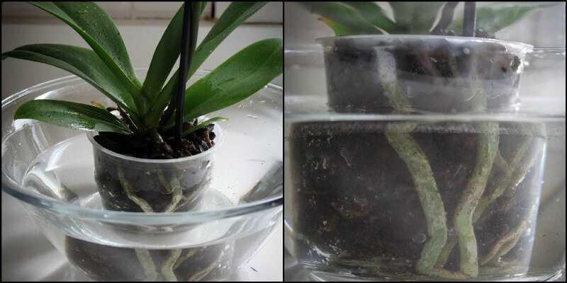 pochemu-u-orhidei-vyanut-tsvety-ustranyaem-vozmozhnye-prichiny2019-02-12