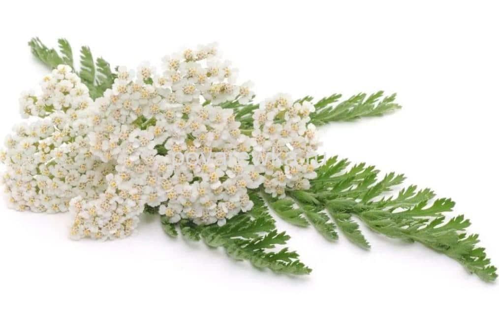 retsepty-novogodnih-salatov2019-02-13